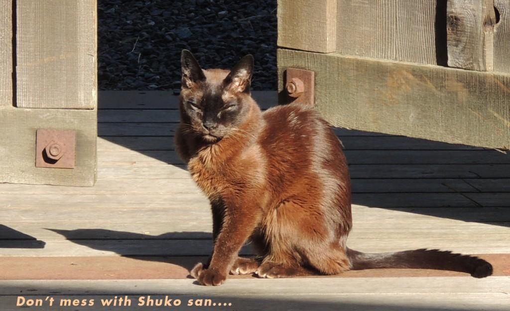 SHUKOSAN-1024x624