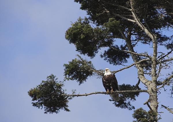 CASUDI~eagle5~May7~2014