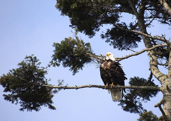CASUUDI~eagle4~May7~2014