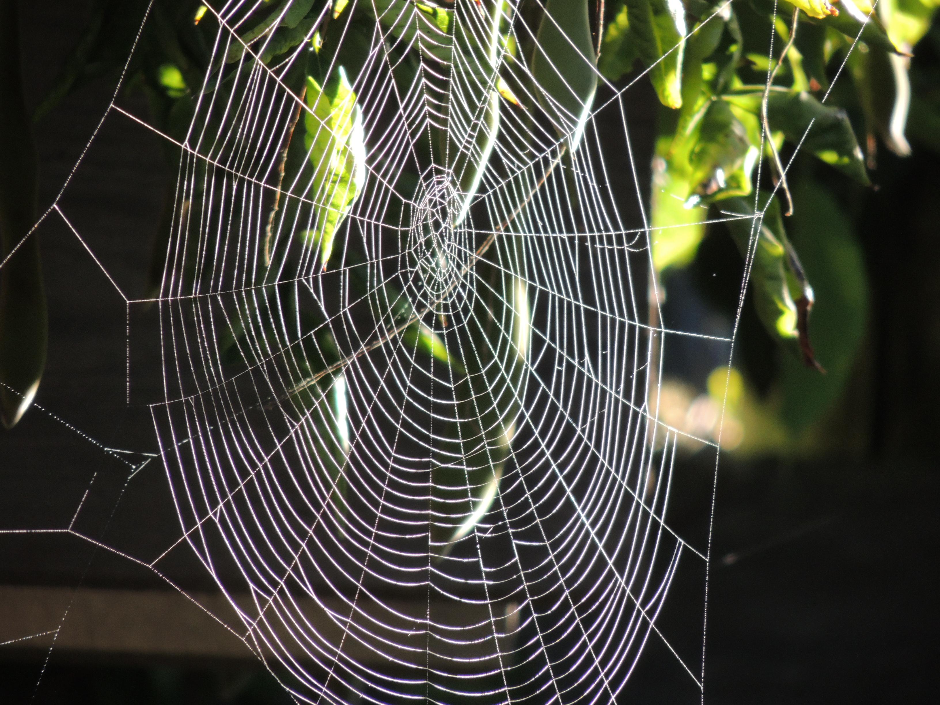 CASUDI-WEB